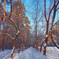 В морозный иней день одетый! :: Елена (Elena Fly) Хайдукова