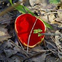 Вот гриб весенний... :: Юрий Куликов
