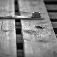 Бабочка ... :: Евгений Хвальчев