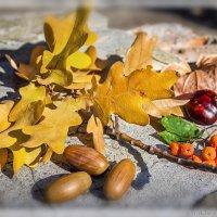 Осенний мотив :: Denis Aksenov
