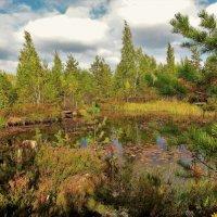 Лесное озеро... :: Sergey Gordoff