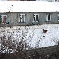 Кыш, вороны! :: Ильсияр Шакирова