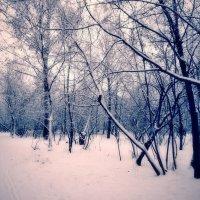 Зима...... :: Наталья Лакомова