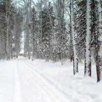 Снежный ноябрь.. :: Мила Бовкун