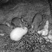 Кроличья семейка :: Светлана Рябова-Шатунова
