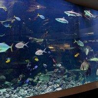 Панорамный аквариум в Мегакомплексе «ГРИНН» объемом в 120 000 литров. Обитает 12 видов рыб :: Надежд@ Шавенкова