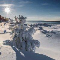 Много снега в декабре :: Татьяна Дубровина