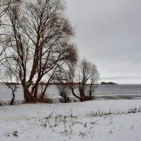 Зима. На берегу Вохова. :: Olcen Len