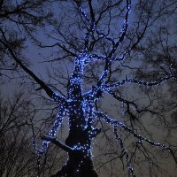 Взгляд на небо декабря. :: Татьяна Помогалова