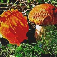 Вспоминая осень :: Raduzka (Надежда Веркина)
