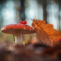 Лесной мухомор :: Роман Зайцев