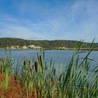Озеро Плешки. Старица реки :: Алексей Сметкин