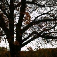 Лишь дерево стоит одно... :: Елизавета