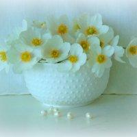 Белые цветы. :: nadyasilyuk Вознюк