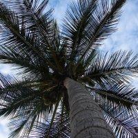 Пальмы рвутся в небеса :: Юлия Грозенко