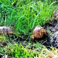 Декабрьские грибочки :: Аркадий Басович