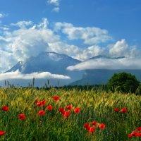 прекрасен лес и горы, и цветы... :: Elena Wymann