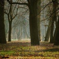 Парк в декабре. :: barsuk lesnoi