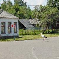 В деревне Якубово! :: Андрей Буховецкий