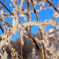 Зимние украшения :: Нэля Лысенко