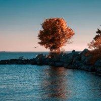 Осенние пляжи моего города :: Таня Ревва