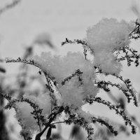 Зимушка- зима :: олег свирский