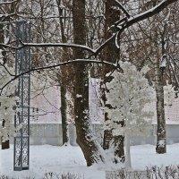 """Там  в  дали Сад  """" Снежной королевы"""" :: Виталий Селиванов"""