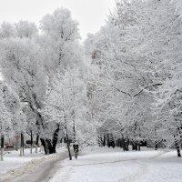 Зимний день. :: Алексей .