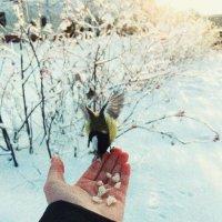 птичка-синичка :: Оля M
