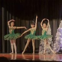 Совсем зелёненькие балеринки :: Олег Чемоданов