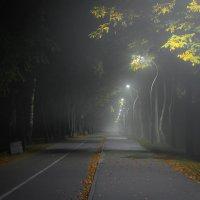 Спящий парк :: Руслан Шумилин