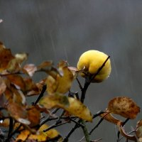 сегодня идет дождь .... :: Heinz Thorns