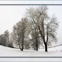 Зима...декабрь... :: Александр Широнин