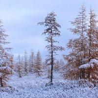 Засеньтябрило в Арктике :: Александр Велигура