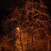 а вечером выпал снег... :: Натали Акшинцева