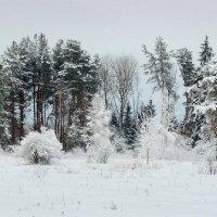 Зимние зарисовки :: Павлова Татьяна Павлова
