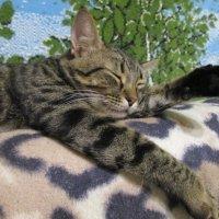 Мой кот ТОФик. :: Алексей Кузнецов