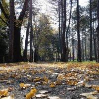 и шелест листьев под ногами :: Виктория Попова