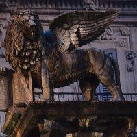 Италия. Верона. Крылатый лев-символ Венеции, под властью которой город был 400 лет. :: Galina Leskova