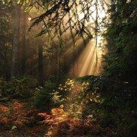 Благословенный лес :: Лариса Крышталь