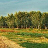 Дорога из чистого песка :: Николай Мартынов