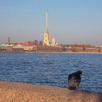 Петропавловская крепость :: Фотогруппа Весна - Вера, Саша, Натан
