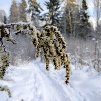 Снег, мороз - Зима! :: Владимир Гараган
