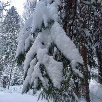 """""""И под снежной бахромою, неподвижною, немою, чудной жизнью лес блестит"""" :: Ирэн"""