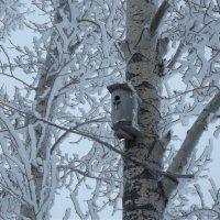 Скворечник в снежных кружевах :: Светлана Рябова-Шатунова