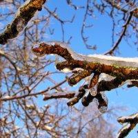 После ледяного дождя. Декабрь 2010 :: Евгений Кочуров