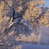 Зимнее утро :: Наталия Григорьева