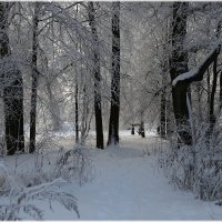 В плену снегов...и инея :: ZNatasha -