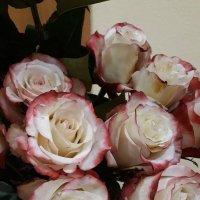 Шикарные розы для Вас друзья!!! :: Sabina