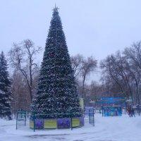 Скоро Новый Год... :: Тамара (st.tamara)